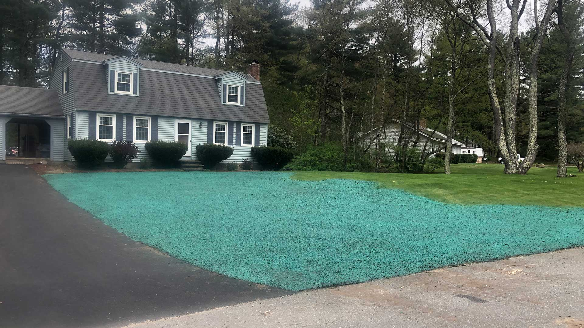 This lawn in Concord, MA has been hydroseeded.