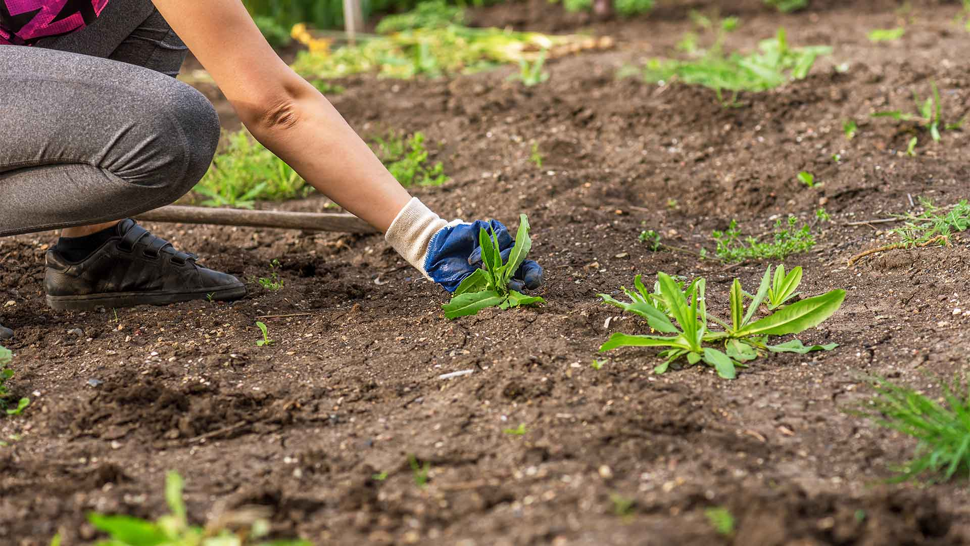 Weed control services in Lunenburg, MA and other surrounding areas.