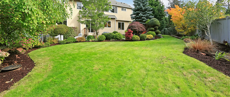 A lawn after our company's core aeration and overseeding services in Leominster, MA.