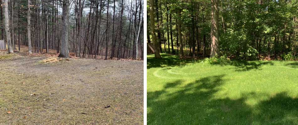 A yard in Leominster, MA before and after slice seeding.