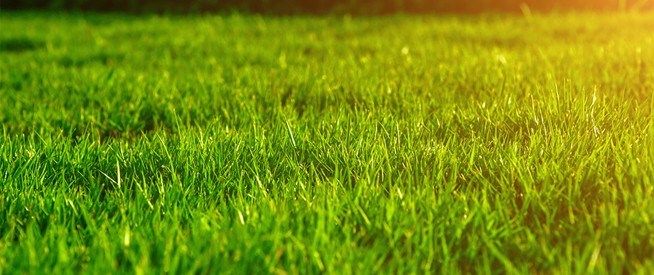 Soil testing helps conserve energy for your lawn in Lunenburg, MA.